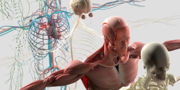 Anatomy Trains – łańcuchy powięziowe według Toma Mayersa